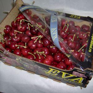 Cherry Van