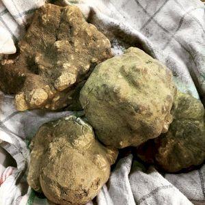 Mushroom White Truffle