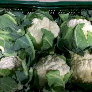 Cabbage Cauliflower