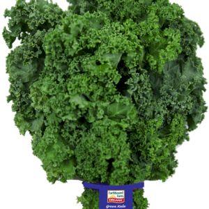 Cabbage Kale
