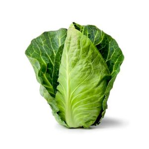 Cabbage Pointed