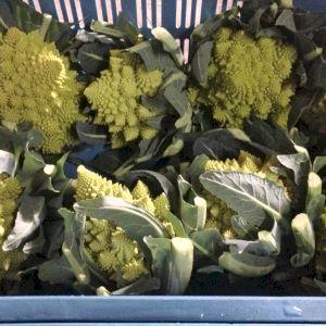 Cabbage Romanesco Broccoli