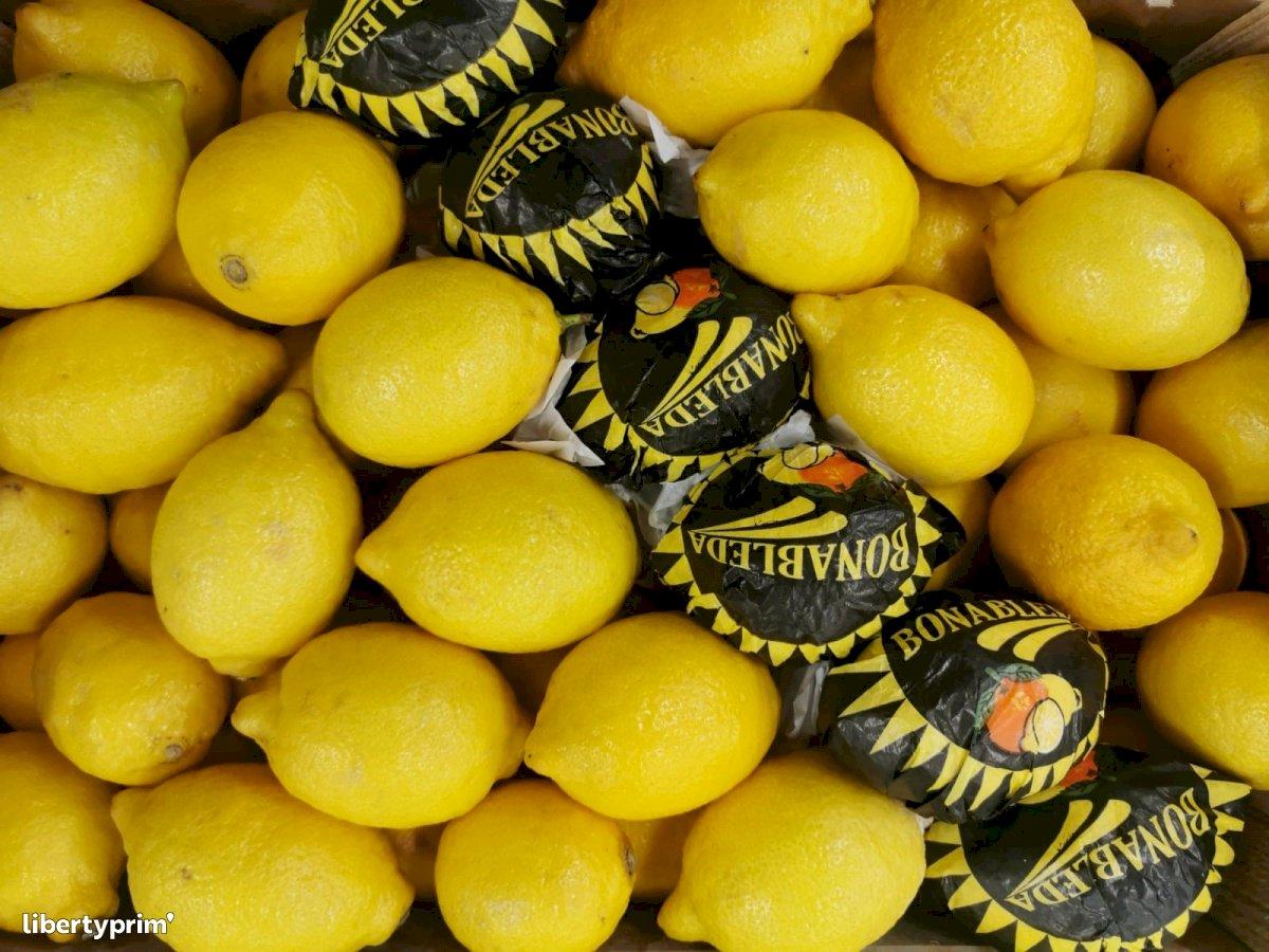 Lemon Primofiore Class 1 Spain Distributor - guillem66 | Libertyprim