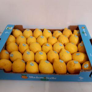 Lemon Verna