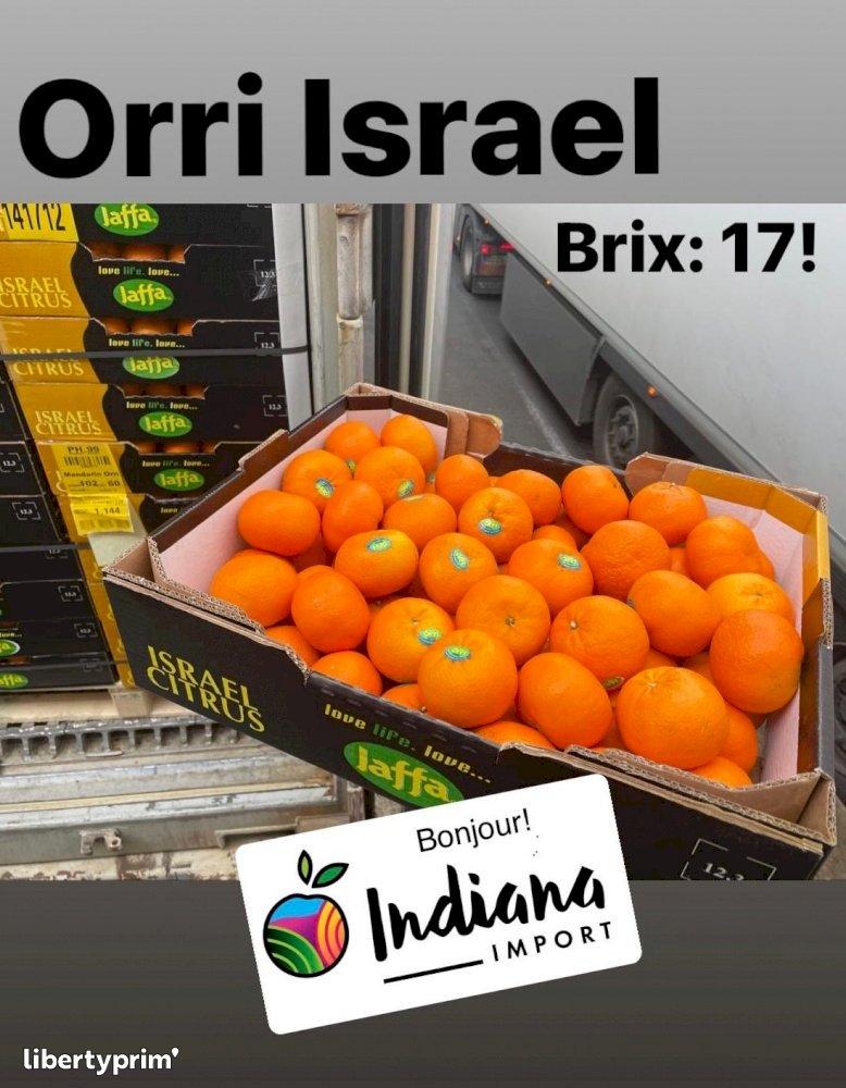 Clementin Orri Class 1 Israel Importer - INDIANA IMPORT   Libertyprim