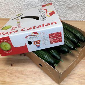 Cucumber Dutch