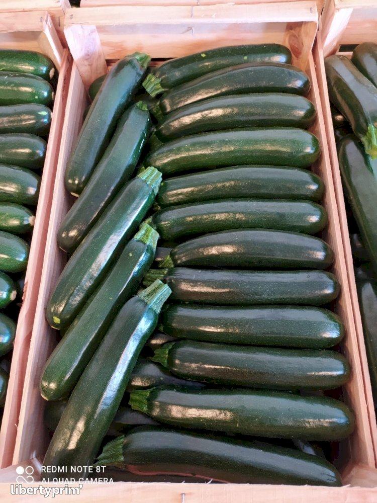 Zucchini Long Green Class 1 Spain Conventional Grower - Peruzzo | Libertyprim