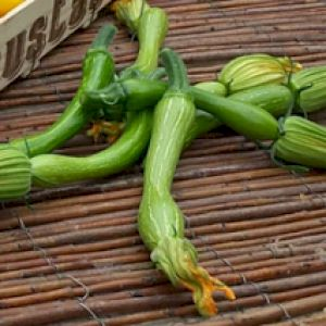 Zucchini Trumpet