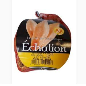 Shallot Echalion