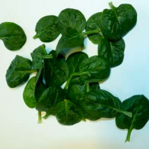 Spinach Sprout