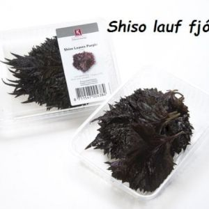 Shiso Leaves Red