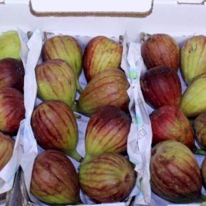Fig Blackbursa