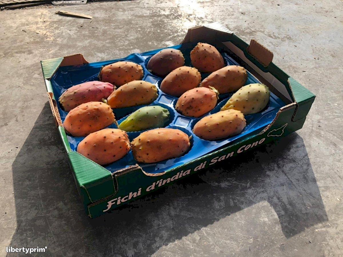 Prickly Pear Class 1 Conventional Grower - Peruzzo | Libertyprim