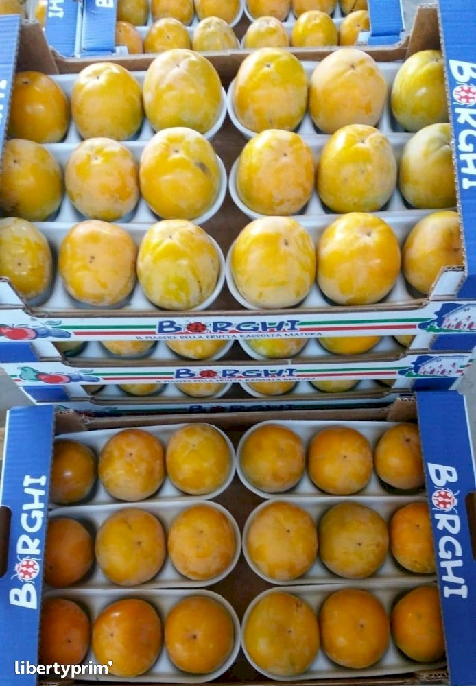 Persimmon Italy Conventional Grower - Peruzzo   Libertyprim
