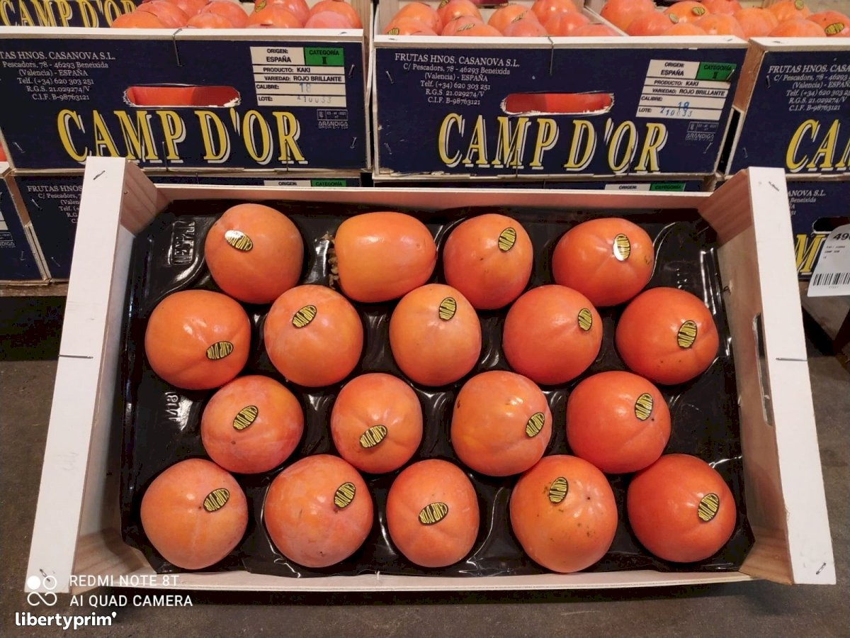 Persimmon Italy Conventional Grower - Peruzzo | Libertyprim