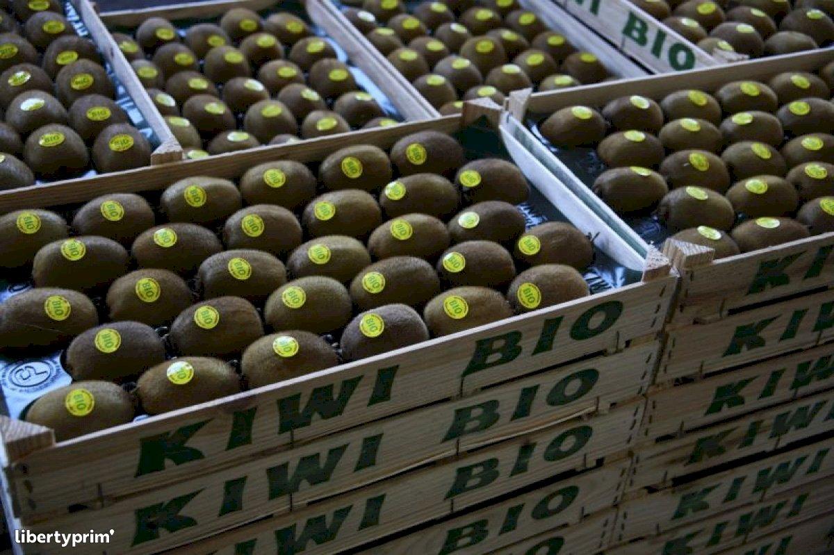 Kiwi Extra France Coopérative Agricole - KSO-KIWI | Libertyprim