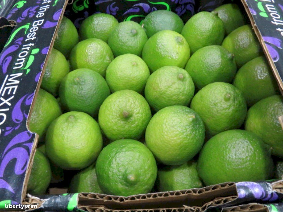 Lime Class 1 France Import/export - TotalProduceIndigo | Libertyprim