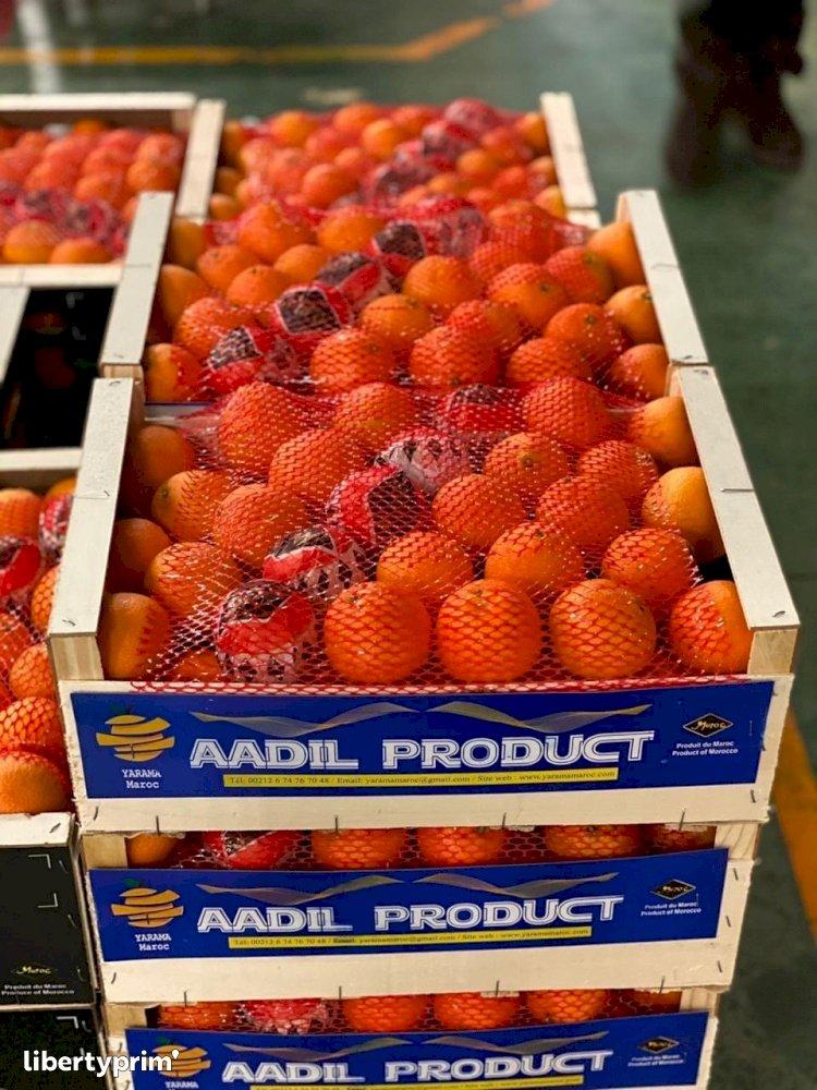 Mandarin Nour Extra Morocco Exporter - Saibprime   Libertyprim