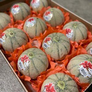 Melon Yellow Charentais