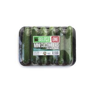 Mini Cucumber