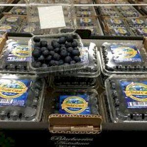 Blueberry Black