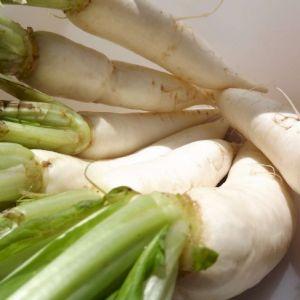 Turnip Long White