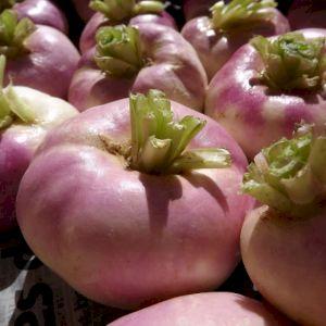 Turnip Round Purple