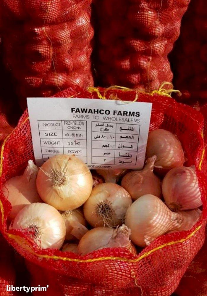 Oignon Jaune Catégorie 1 Egypte Producteur Conventionnel - FawahCo Farms | Libertyprim