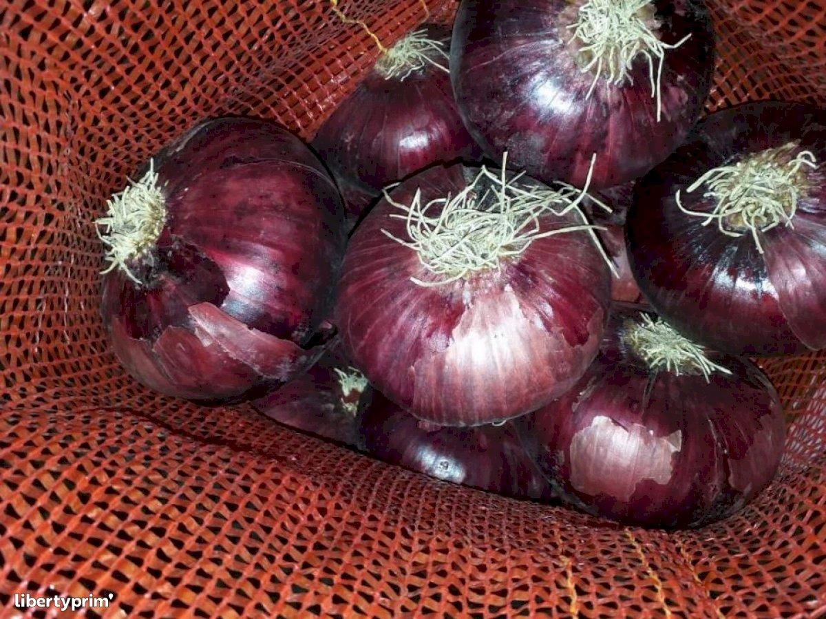 Oignon Rouge Catégorie 1 Producteur Conventionnel - FawahCo Farms   Libertyprim