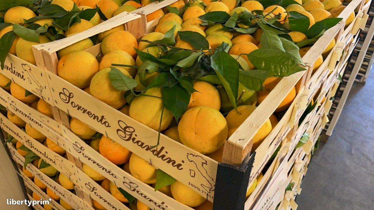 Orange Catégorie 1 Italie Producteur Conventionnel - Peruzzo | Libertyprim