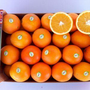 Orange Lane Late