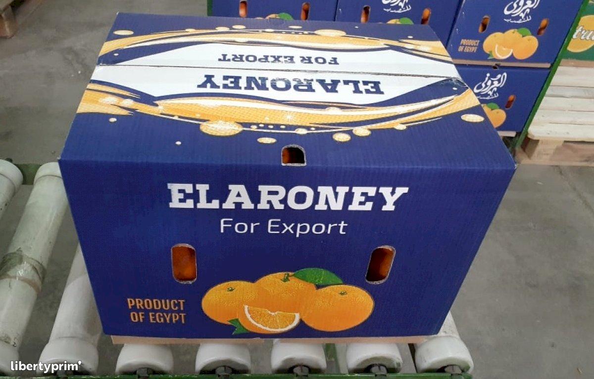 Orange Class 1 Egypt Exporter - 21 | Libertyprim