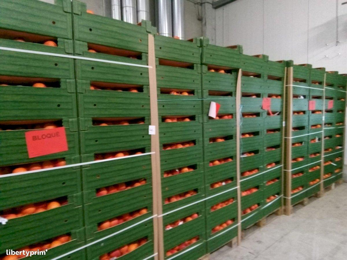 Orange Moro Class 1 Italy Conventional Grower - Peruzzo   Libertyprim