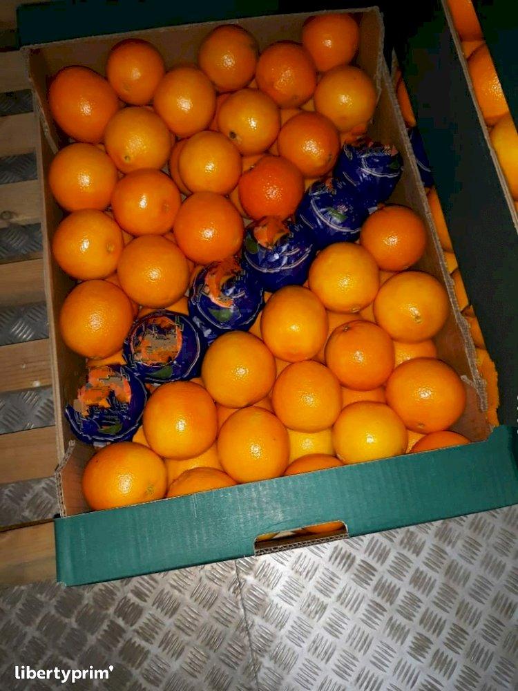 Orange Naveline Class 1 Greece Broker - Christos188 | Libertyprim