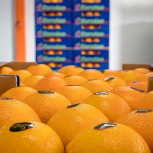 Orange New Hall