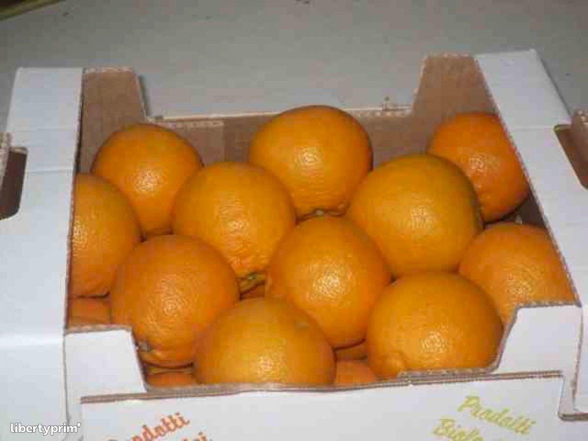 Orange Tarocco Italy Organic Grower - Patty21 | Libertyprim