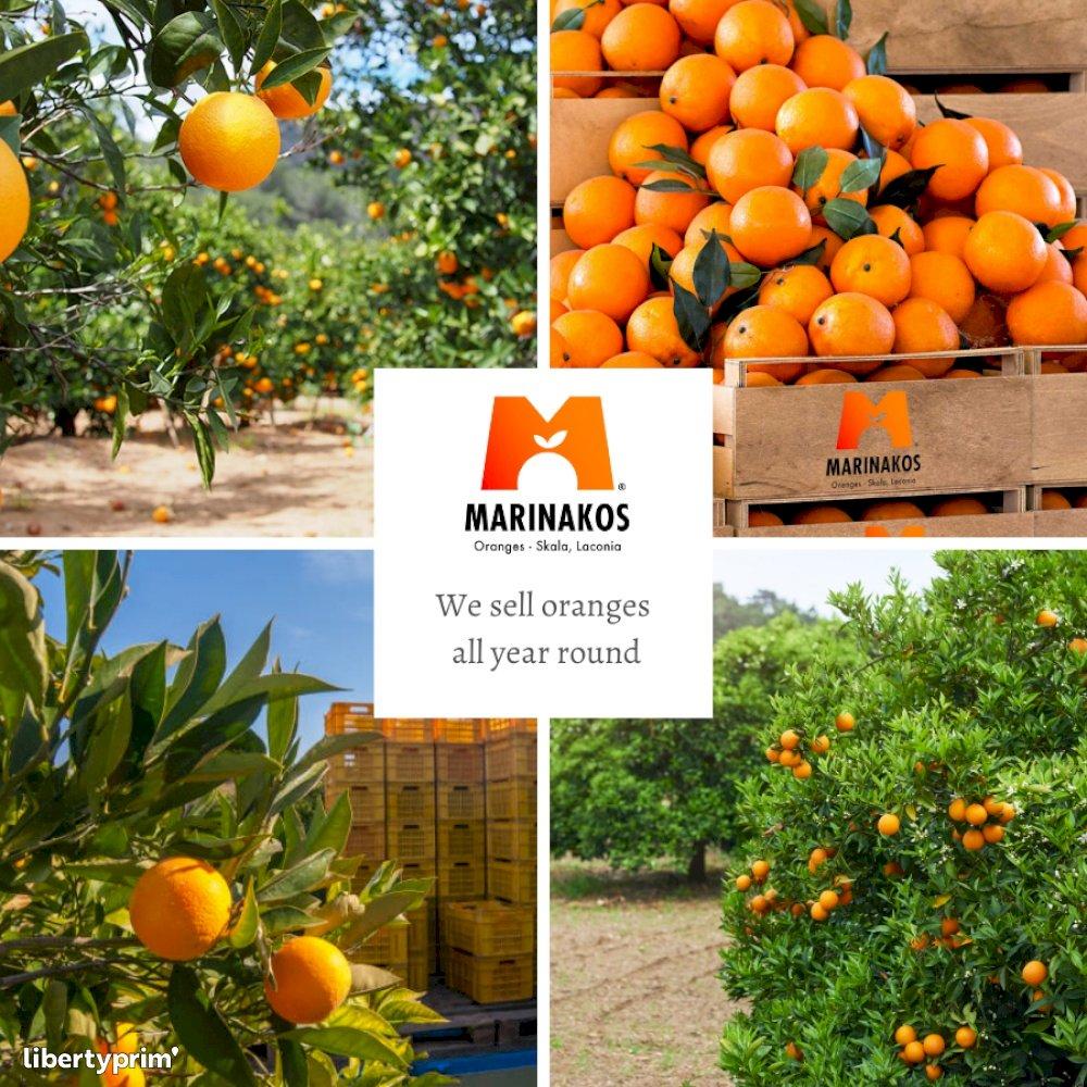 Orange Valencia Extra Greece Conventional Grower - info@marinakosoranges.com   Libertyprim