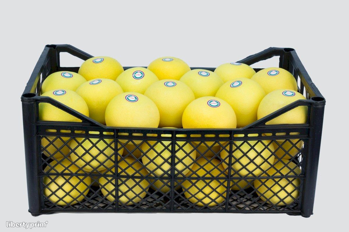 Grapefruit Class 1 Turkey Exporter - Eren | Libertyprim
