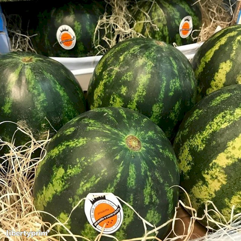 Watermelon Wholesaler - PRIMIZIEXPRESS | Libertyprim