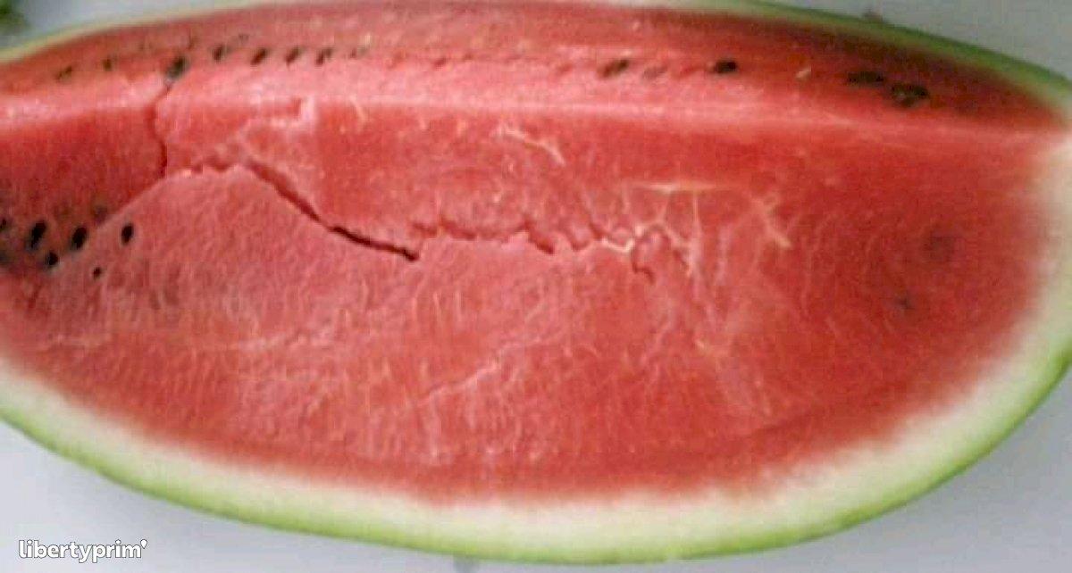 Watermelon Crimson Tide Tunisia Exporter - barhoumi | Libertyprim