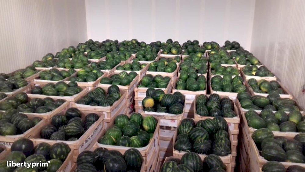 Watermelon Croatia Conventional Grower - Frutarija   Libertyprim