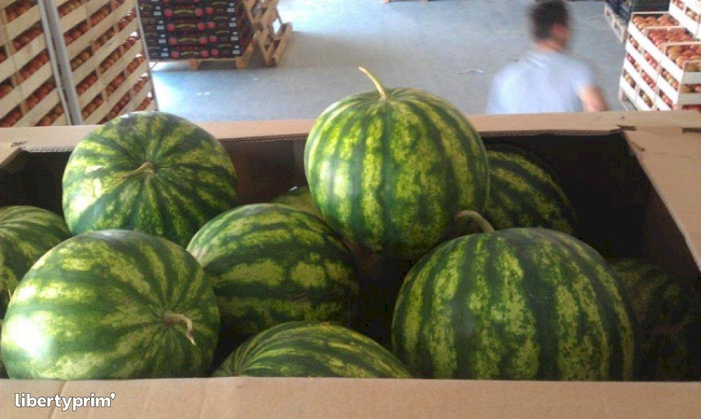 Watermelon Macedonia North Conventional Grower - BADZO   Libertyprim