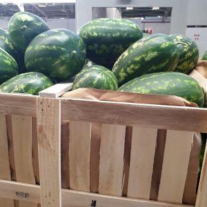Watermelon Zagora
