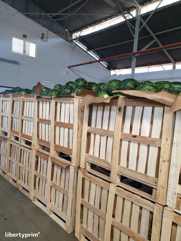 Watermelon Zagora Morocco Wholesaler - directoriental59 | Libertyprim