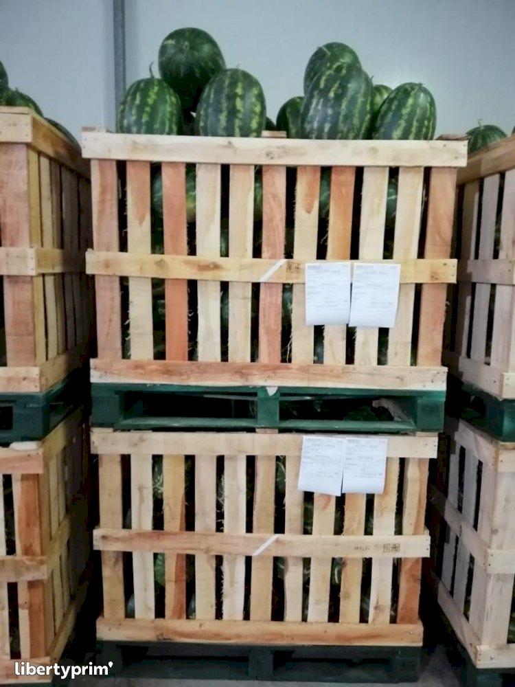 Watermelon Zagora Extra Morocco Wholesaler - directoriental59 | Libertyprim