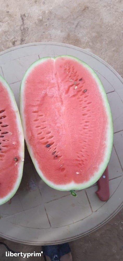 Watermelon Zagora Extra Morocco Import/export - Christ591 | Libertyprim