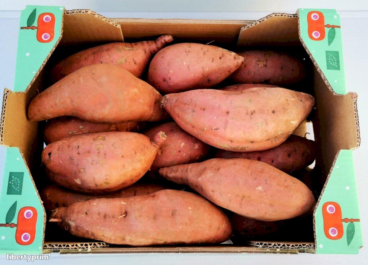 Patate Douce Beauregard Catégorie 1 Espagne Producteur Bio - Bio La Extra-terrestre | Libertyprim