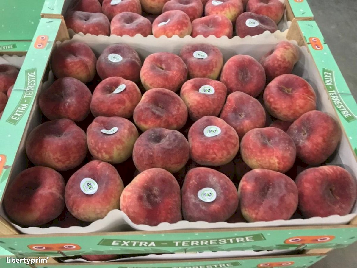 Peach Flat Spain Organic Grower - Bio La Extra-terrestre   Libertyprim