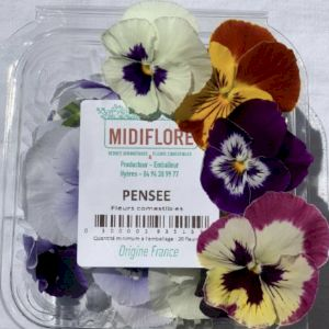 Edible Pansy