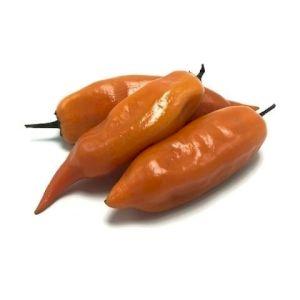 Chile Pepper Ají Amarillo